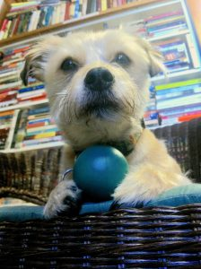 Gavin guarding his ball